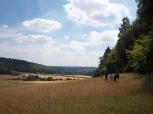 Views around the Ashridge estate